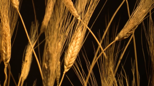 Food la scienza dai semi al piatto