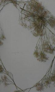 Particolare dell'installazione di A.d.B. in un scatto di Mila Ferraris