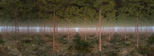 June Anne Nuevo, Forestscape per Upload