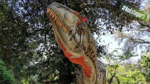perché non è c-14 dating utilizzato in dating ossa di dinosauro Dio centrato datazione