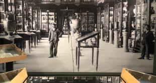 lI Museo che non c'è (più)! : una mostra per ricordare il Museo Provinciale di Bari
